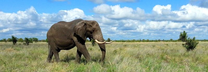 découverte d'afrique du Sud