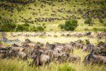 3 réserves et parcs kényans à visiter pour les amoureux de la nature
